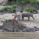 The elephants and the Mahout