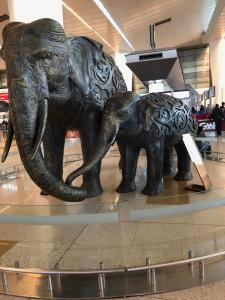 Elephants in Indira Gandhi International Airport